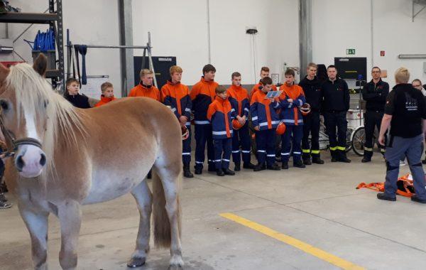 Pony in Notlage
